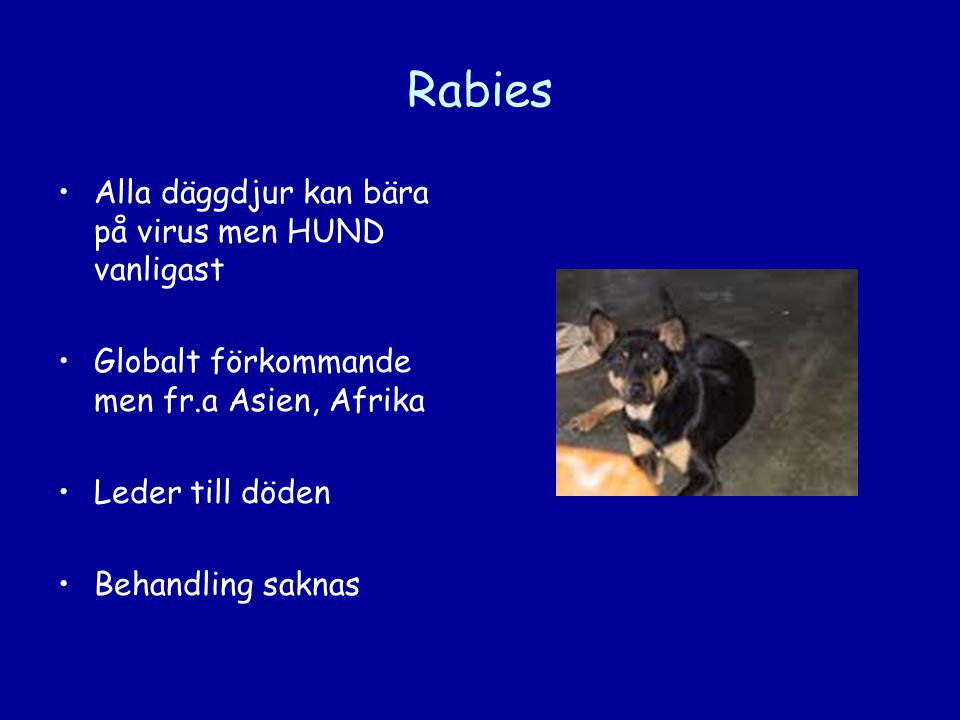 Rabies •Alla däggdjur kan bära på virus men HUND vanligast •Globalt förkommande men fr.a Asien, Afrika •Leder till döden •Behandling saknas