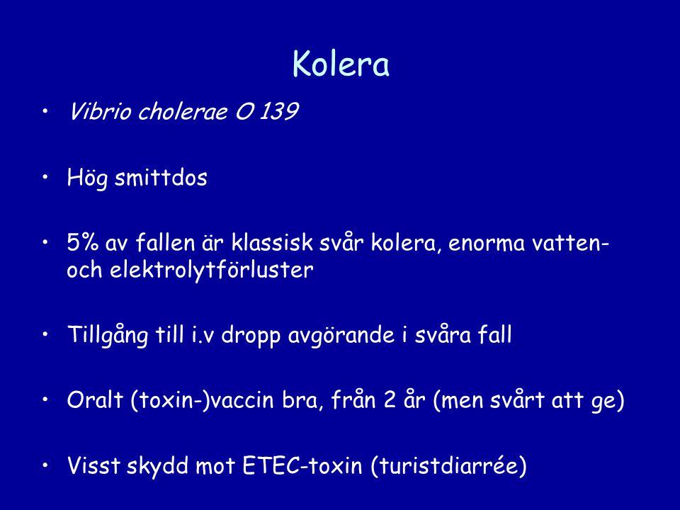•Vibrio cholerae O 139 •Hög smittdos •5% av fallen är klassisk svår kolera, enorma vatten- och elektrolytförluster •Tillgång till i.v dropp avgörande