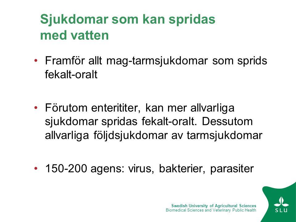Swedish University of Agricultural Sciences Biomedical Sciences and Veterinary Public Health Sjukdomar som kan spridas med vatten •Framför allt mag-ta