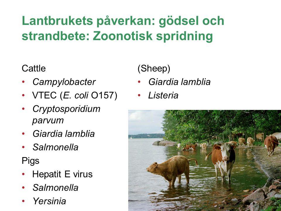 Swedish University of Agricultural Sciences Biomedical Sciences and Veterinary Public Health Lantbrukets påverkan: gödsel och strandbete: Zoonotisk sp
