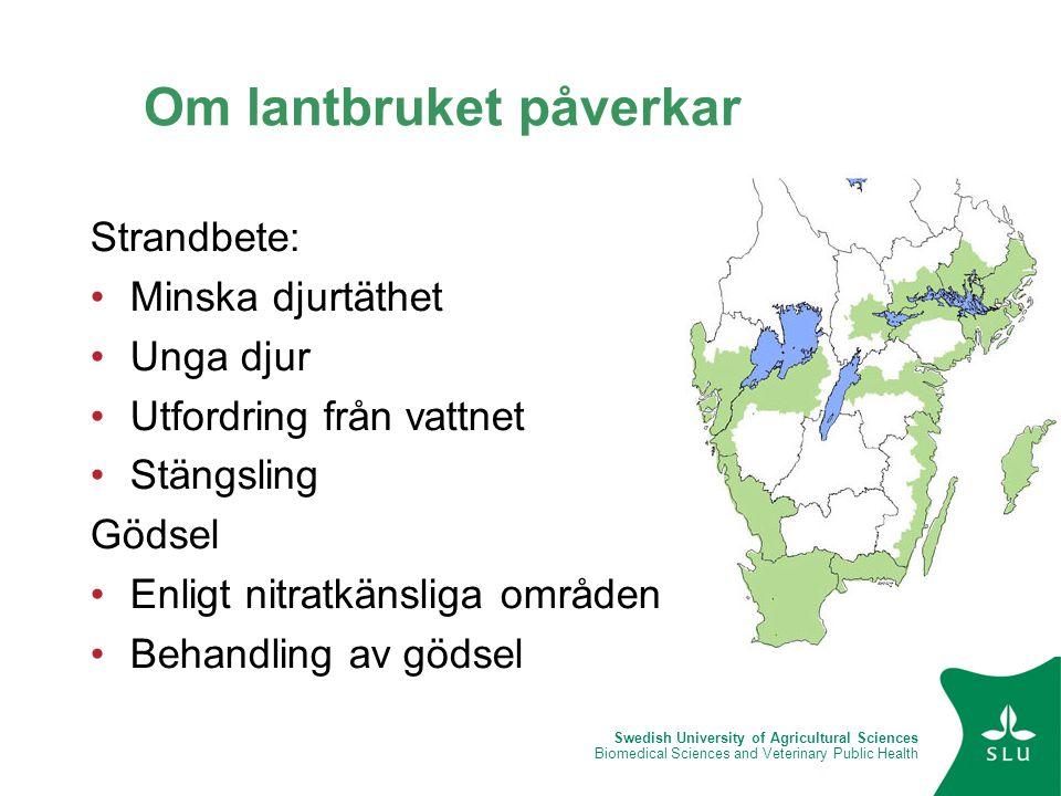 Swedish University of Agricultural Sciences Biomedical Sciences and Veterinary Public Health Om lantbruket påverkar Strandbete: •Minska djurtäthet •Un