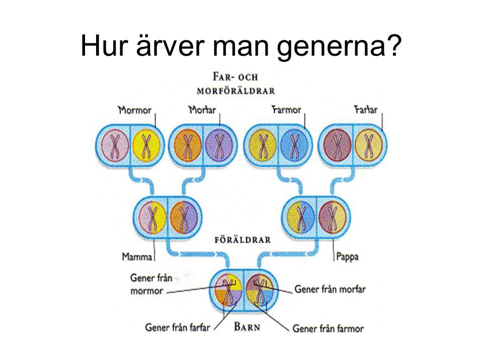 Hur ärver man generna?
