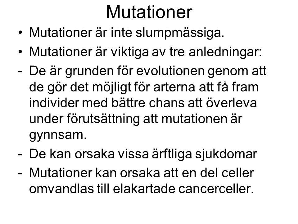 Mutationer •Mutationer är inte slumpmässiga.