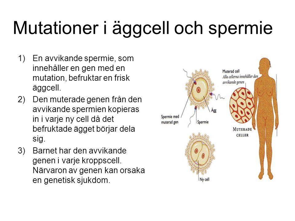 Mutationer i äggcell och spermie 1)En avvikande spermie, som innehåller en gen med en mutation, befruktar en frisk äggcell.