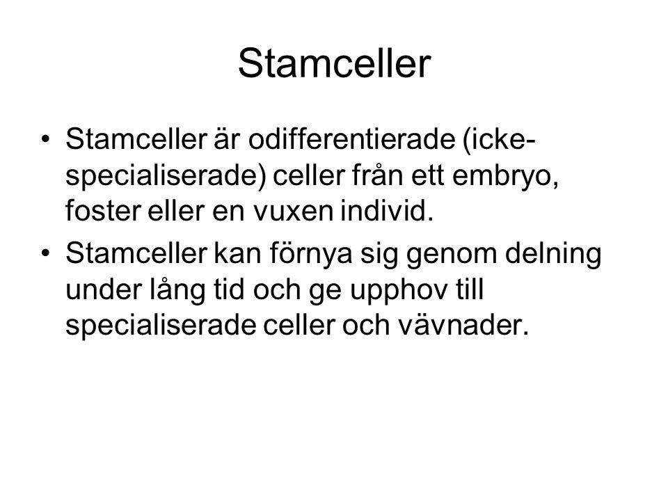 Stamceller •Stamceller är odifferentierade (icke- specialiserade) celler från ett embryo, foster eller en vuxen individ.