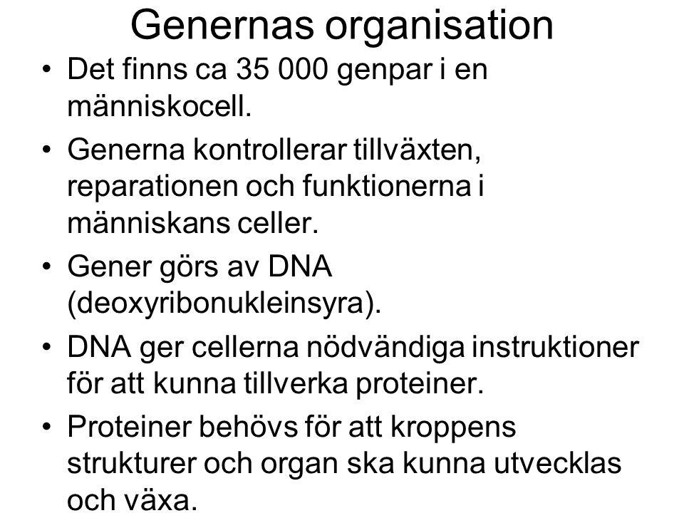 Genernas organisation •Det finns ca 35 000 genpar i en människocell.