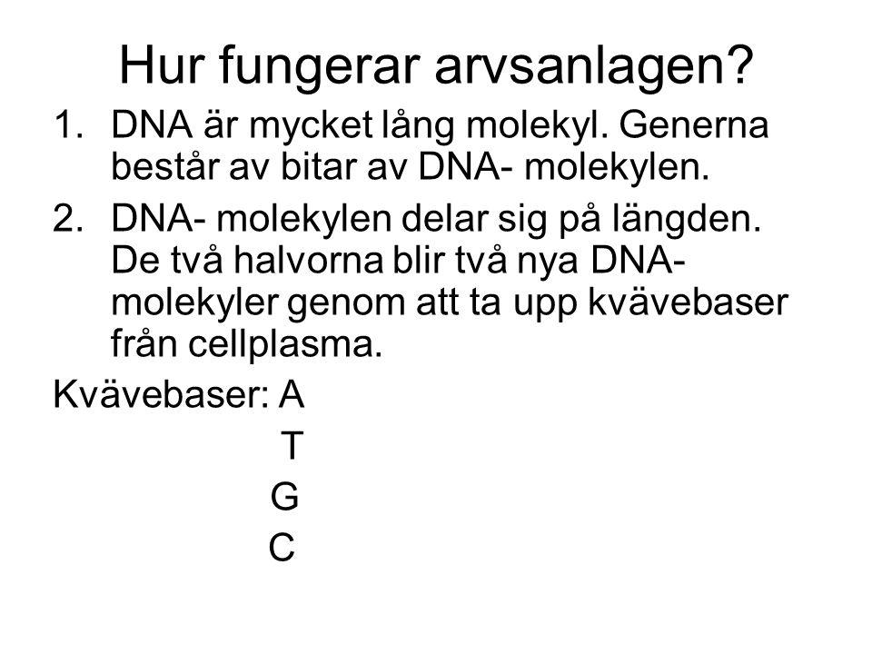 Hur fungerar arvsanlagen.1.DNA är mycket lång molekyl.