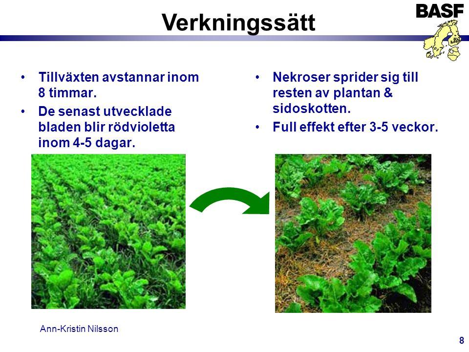 Ann-Kristin Nilsson 9 Två nya graminicider från BASF Optimal behandlingstidpunkt När gräsen har 3-5 blad