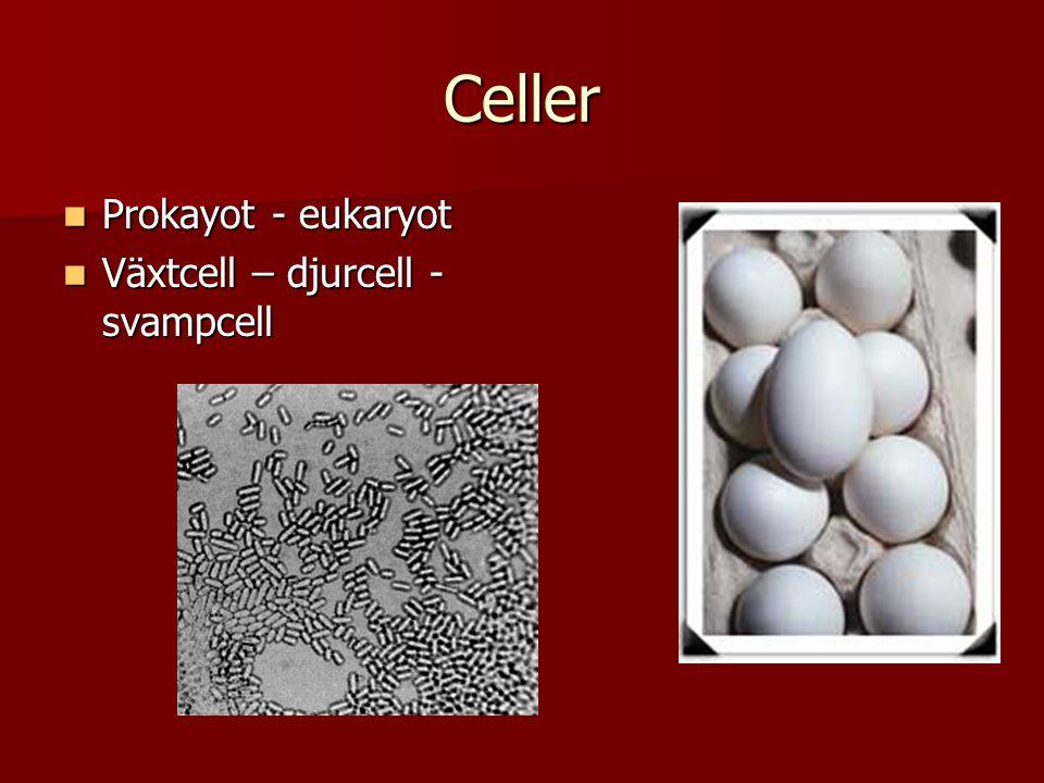 Celler  Prokayot - eukaryot  Växtcell – djurcell - svampcell