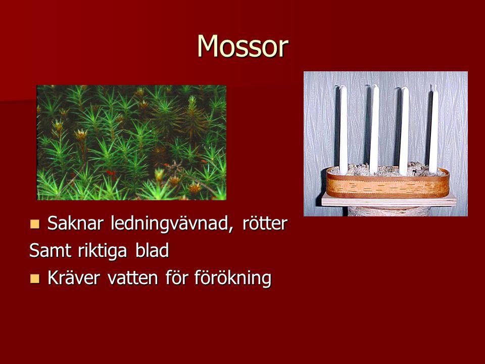 Mossor  Saknar ledningvävnad, rötter Samt riktiga blad  Kräver vatten för förökning