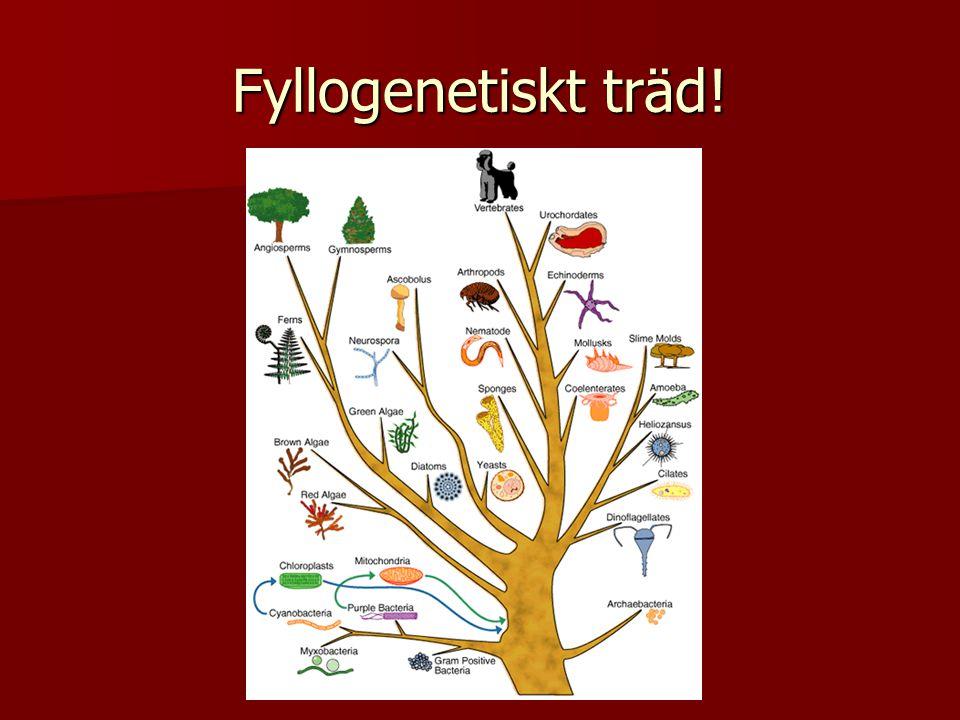 Prokaryota - Arhebakterier  Archeer  Metanogener - metan  Halofil - salt  Termofil-värme