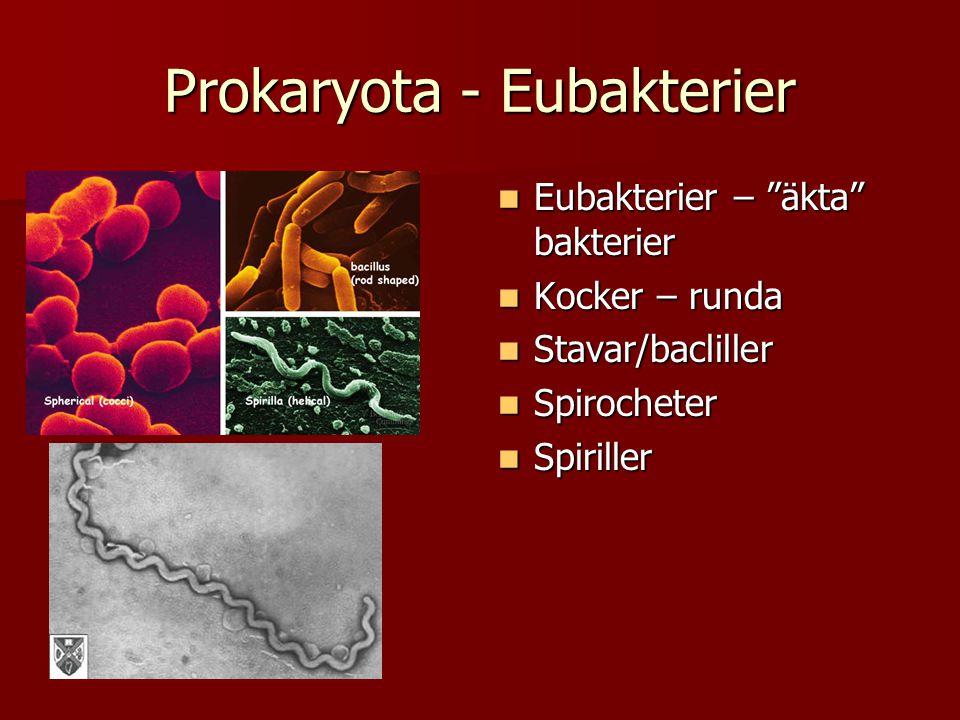 Eukaryota- protozoer  Encelliga eukaryoter samt flercelliga alger  Tex.