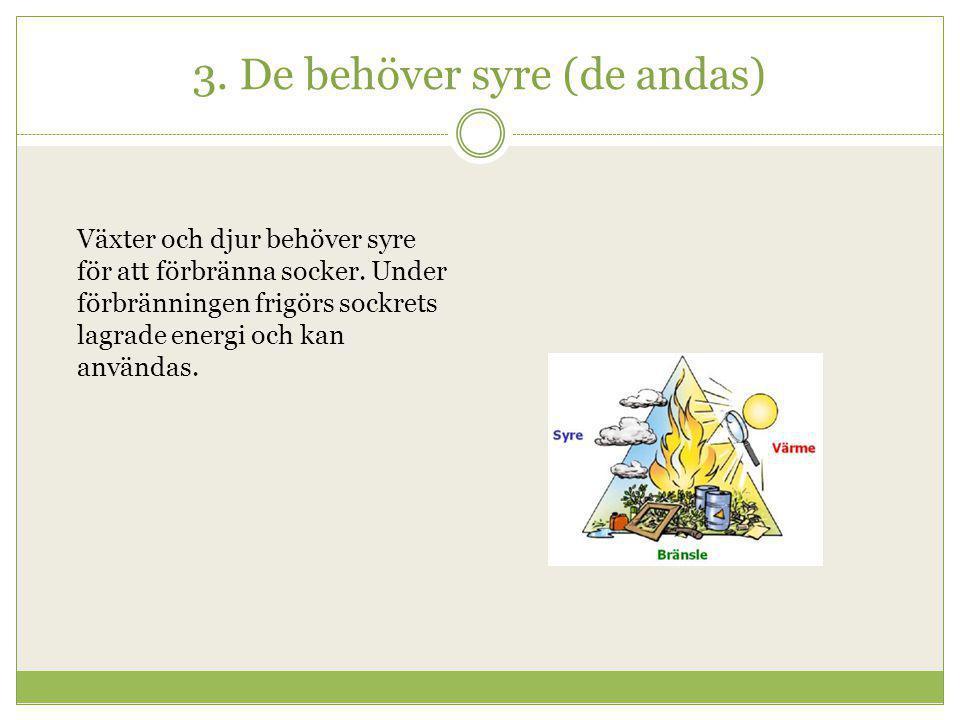 3. De behöver syre (de andas) Växter och djur behöver syre för att förbränna socker. Under förbränningen frigörs sockrets lagrade energi och kan använ