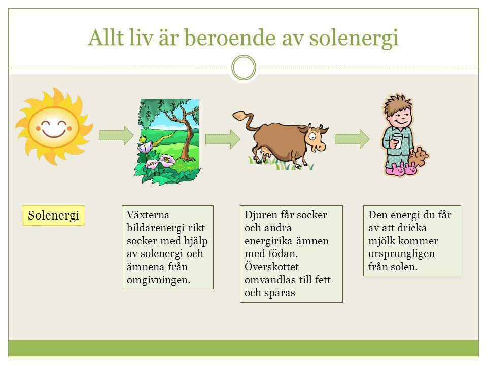Allt liv är beroende av solenergi Växterna bildarenergi rikt socker med hjälp av solenergi och ämnena från omgivningen. Djuren får socker och andra en