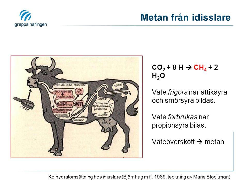 Metan från idisslare Kolhydratomsättning hos idisslare (Björnhag m fl, 1989, teckning av Marie Stockman) CO 2 + 8 H  CH 4 + 2 H 2 O Väte frigörs när