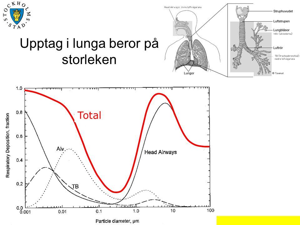 Christer Johansson, SLB-analys, Miljöförvaltningen Stockholm Upptag i lunga beror på storleken Total