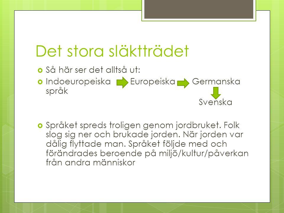 Det stora släktträdet  Så här ser det alltså ut:  Indoeuropeiska Europeiska Germanska språk Svenska  Språket spreds troligen genom jordbruket.