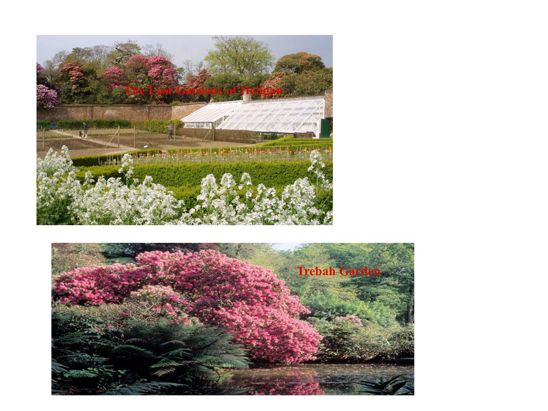 The Lost Gardens of Heligan Trebah Garden