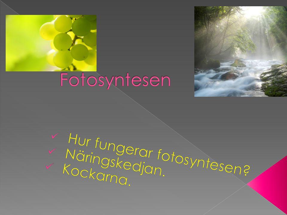  Växterna är viktiga för livet på jorden.