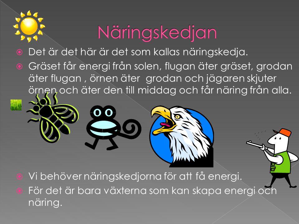  Det är det här är det som kallas näringskedja.  Gräset får energi från solen, flugan äter gräset, grodan äter flugan, örnen äter grodan och jägaren