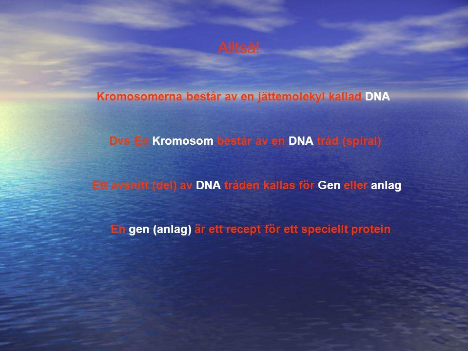 Alltså! Kromosomerna består av en jättemolekyl kallad DNA Dvs En Kromosom består av en DNA tråd (spiral) Ett avsnitt (del) av DNA tråden kallas för Ge