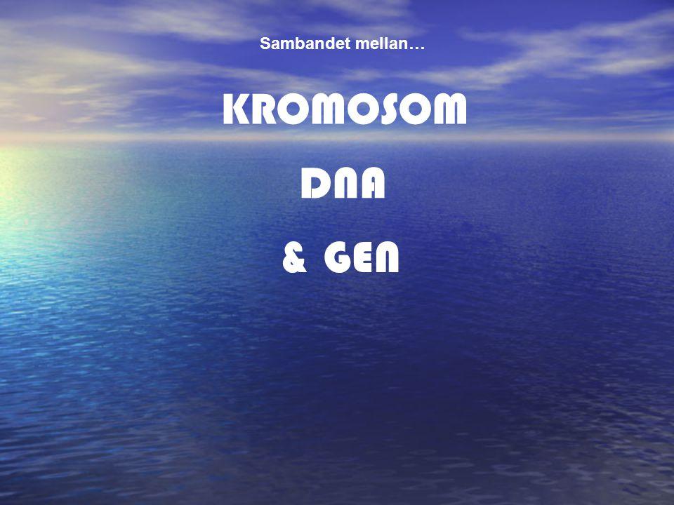 KROMOSOM & GEN Sambandet mellan… DNA