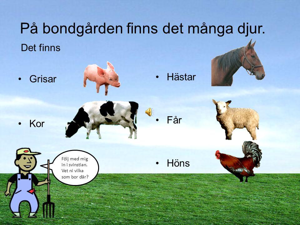 Välkommen till bondgården! Följ med Bertil bonde och lär dig om hans djur. Hej alla barn! Följ med mig så ska jag visa er hur jag har det. Jessica Joh