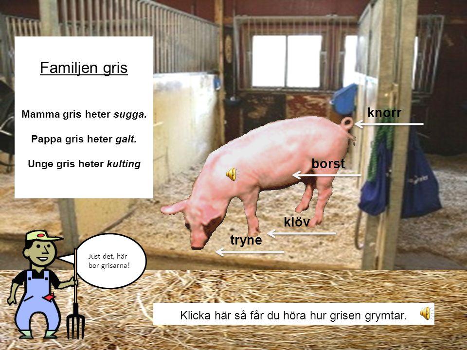 På bondgården finns det många djur. Det finns •Grisar •Kor •Hästar •Får •Höns Följ med mig in i svinstian. Vet ni vilka som bor där?