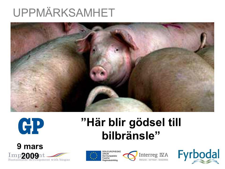 """""""Här blir gödsel till bilbränsle"""" 9 mars 2009 UPPMÄRKSAMHET"""