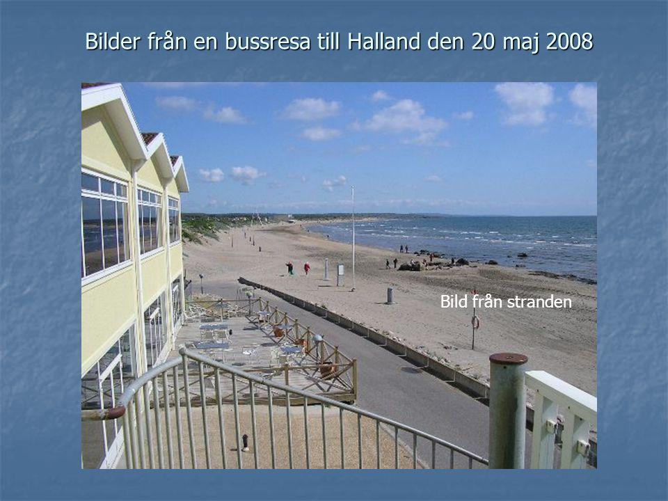 Bilder från en bussresa till Halland den 20 maj 2008 Bild från stranden