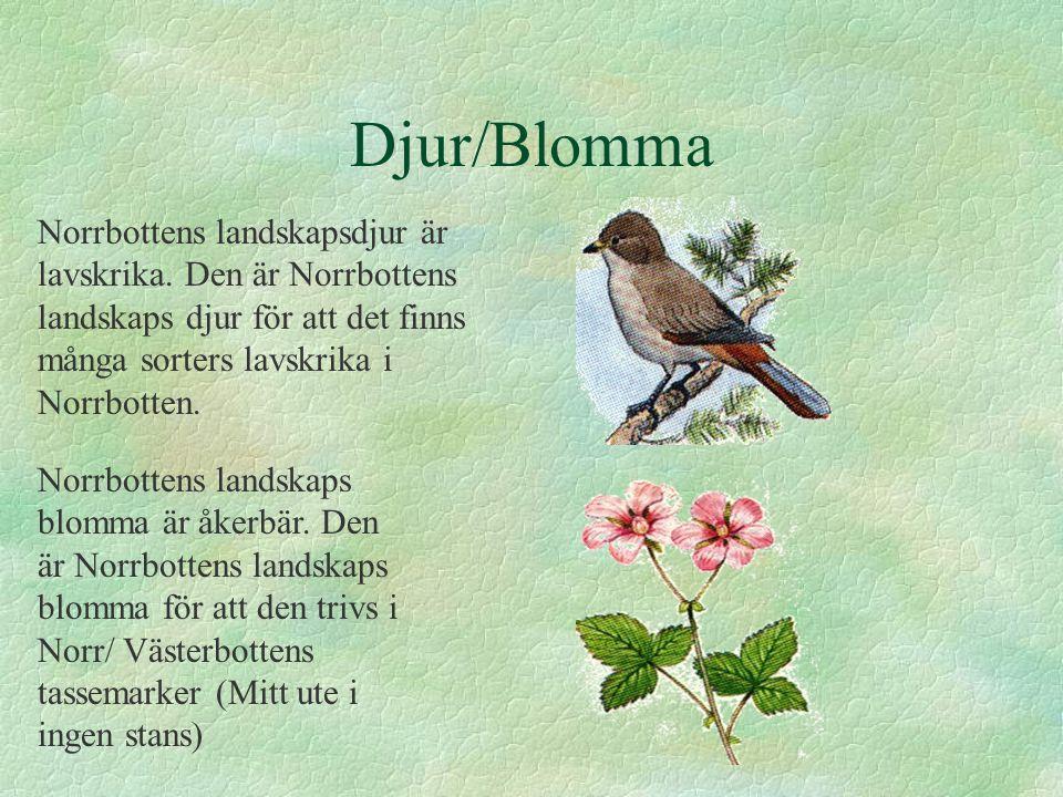 Djur/Blomma Norrbottens landskapsdjur är lavskrika. Den är Norrbottens landskaps djur för att det finns många sorters lavskrika i Norrbotten. Norrbott