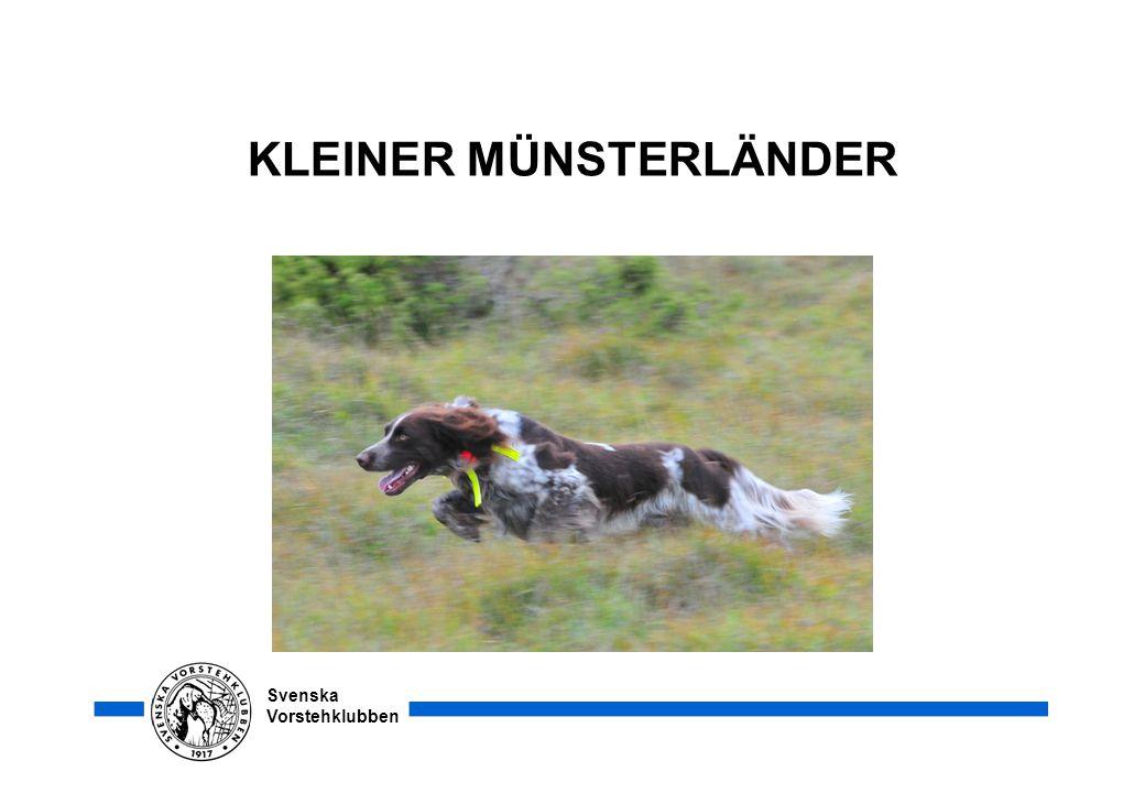 Svenska Vorstehklubben KLEINER MÜNSTERLÄNDER