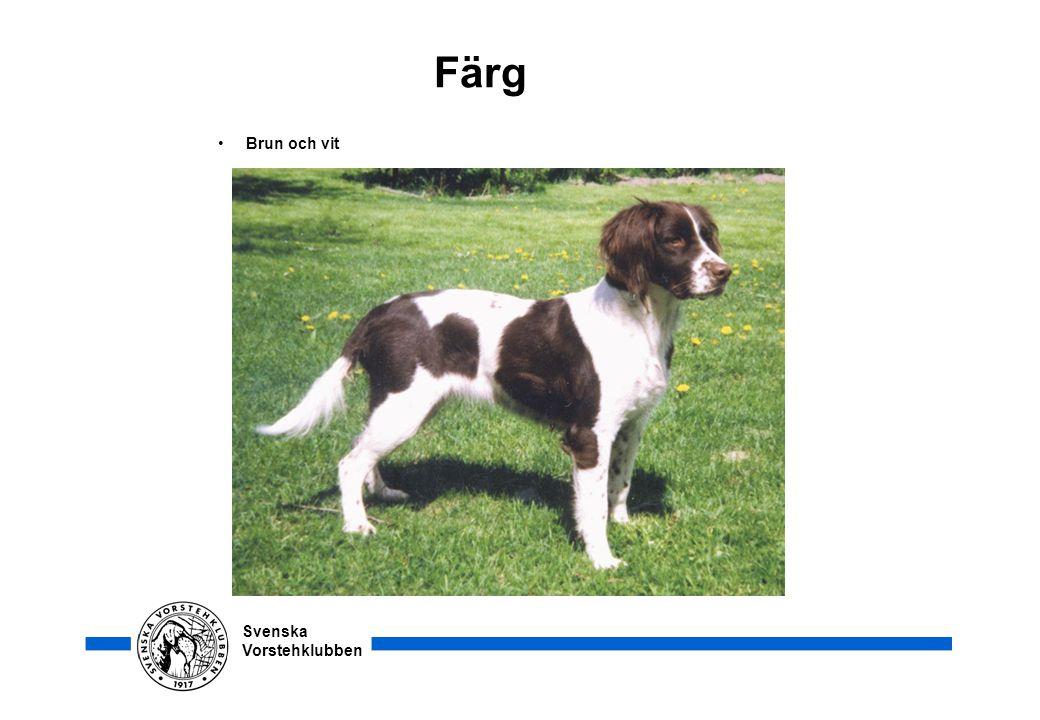 Svenska Vorstehklubben Färg • Brun och vit