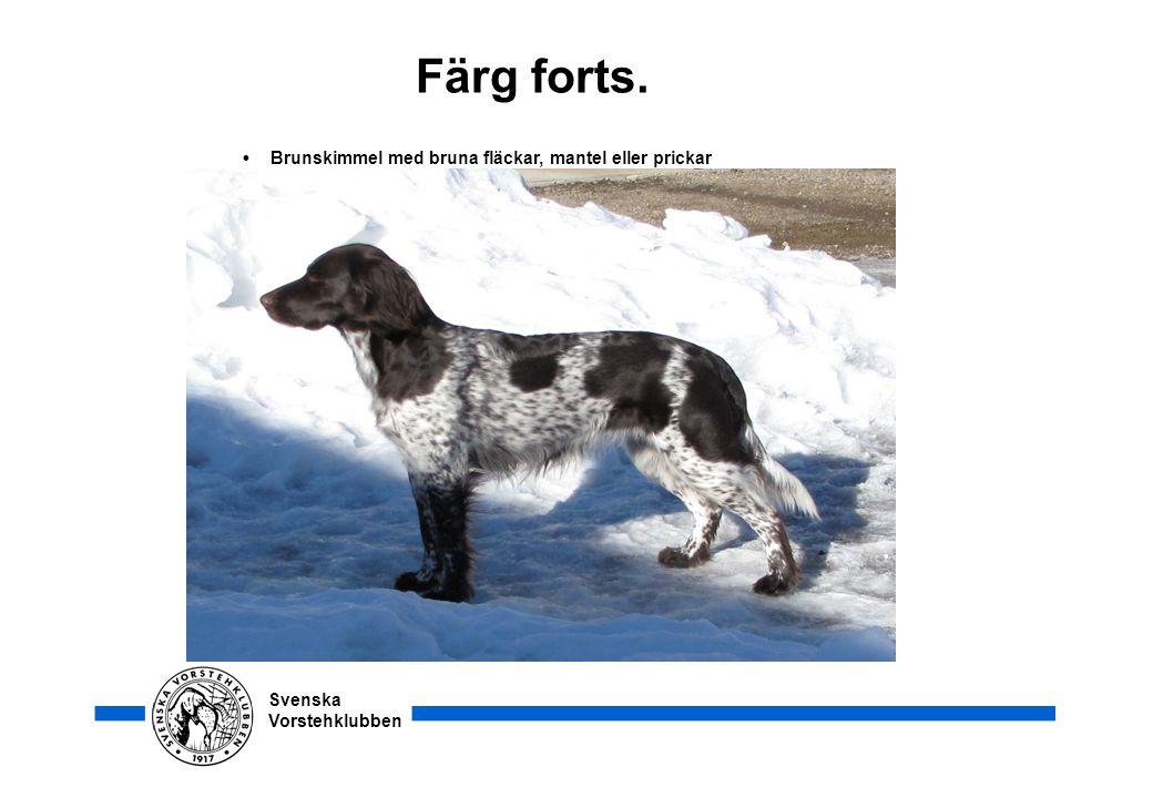 Svenska Vorstehklubben Färg forts. • Brunskimmel med bruna fläckar, mantel eller prickar