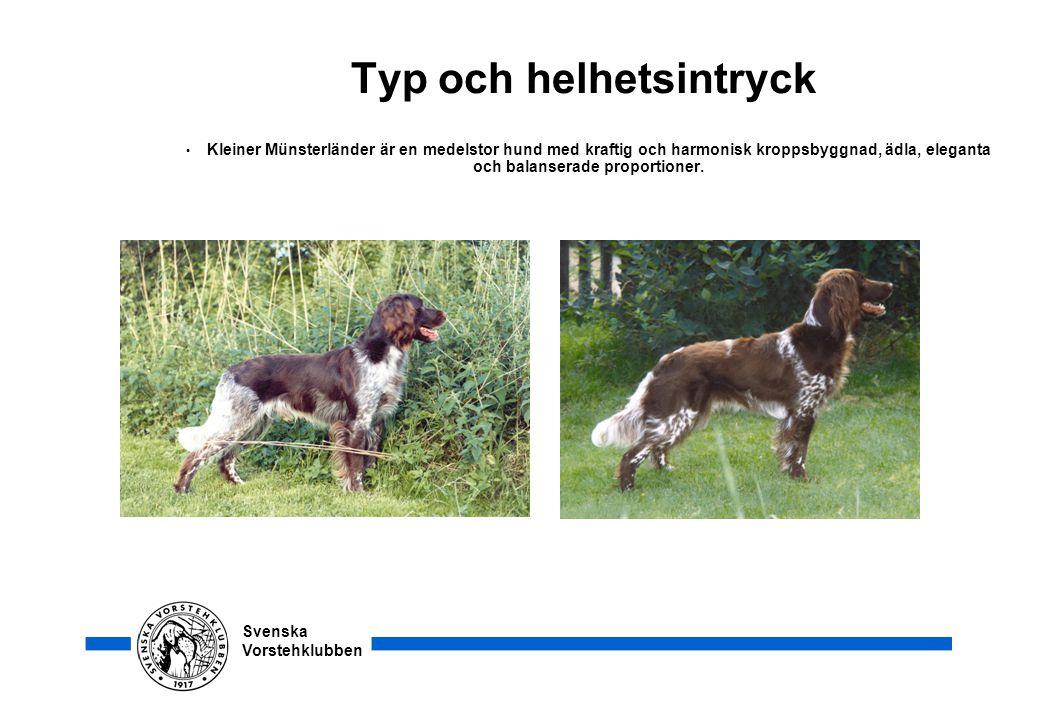 Svenska Vorstehklubben Typ och helhetsintryck • Kleiner Münsterländer är en medelstor hund med kraftig och harmonisk kroppsbyggnad, ädla, eleganta och