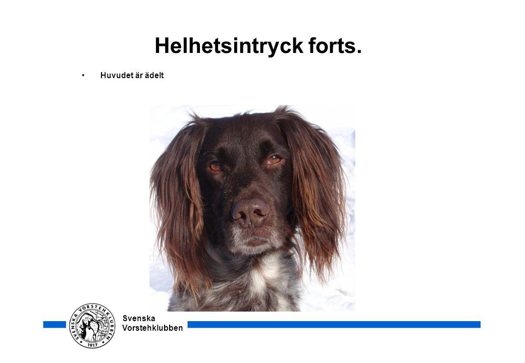 Svenska Vorstehklubben Helhetsintryck forts. • Huvudet är ädelt