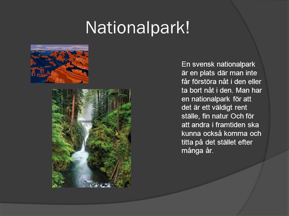 Nationalpark! En svensk nationalpark är en plats där man inte får förstöra nåt i den eller ta bort nåt i den. Man har en nationalpark för att det är e
