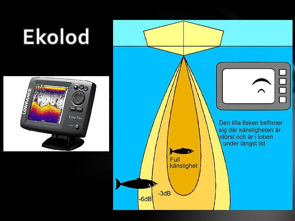 • Vad händer när ljud kommer fram till en vägg? • Rummets akustik? • Efterklang? (i en aula) • Ekolod? Eko