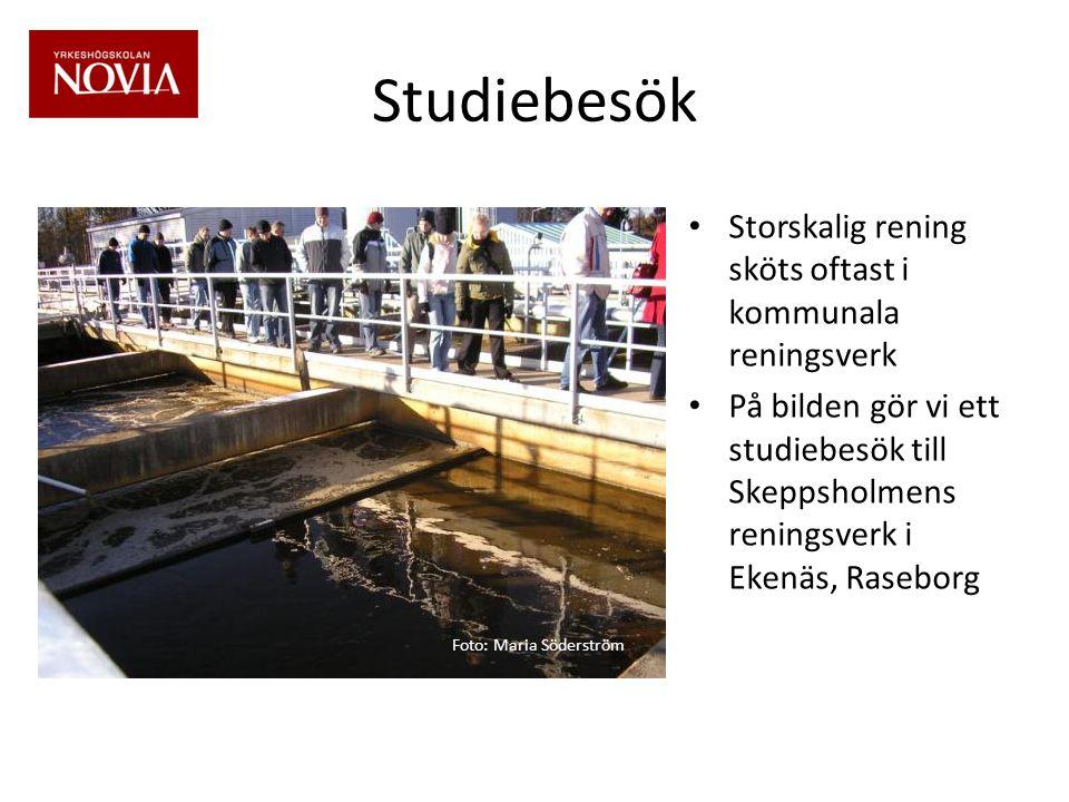 Studiebesök • Storskalig rening sköts oftast i kommunala reningsverk • På bilden gör vi ett studiebesök till Skeppsholmens reningsverk i Ekenäs, Raseborg Foto: Maria Söderström