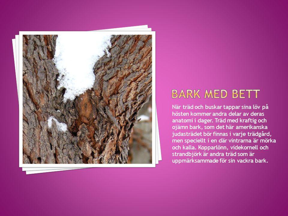 När träd och buskar tappar sina löv på hösten kommer andra delar av deras anatomi i dager. Träd med kraftig och ojämn bark, som det här amerikanska ju