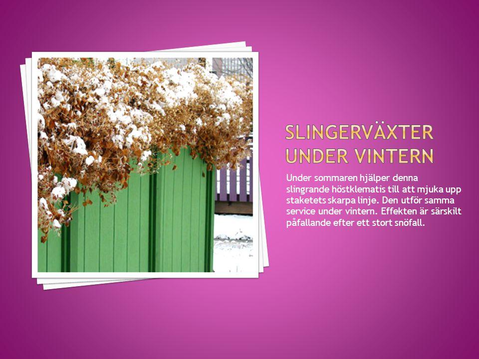 All sorts struktur kan erbjuda ett tilltalande intryck i en vinterträdgård.