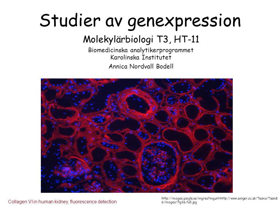 Studier av genexpression Molekylärbiologi T3, HT-11 Biomedicinska analytikerprogrammet Karolinska Institutet Annica Nordvall Bodell Collagen VI in hum