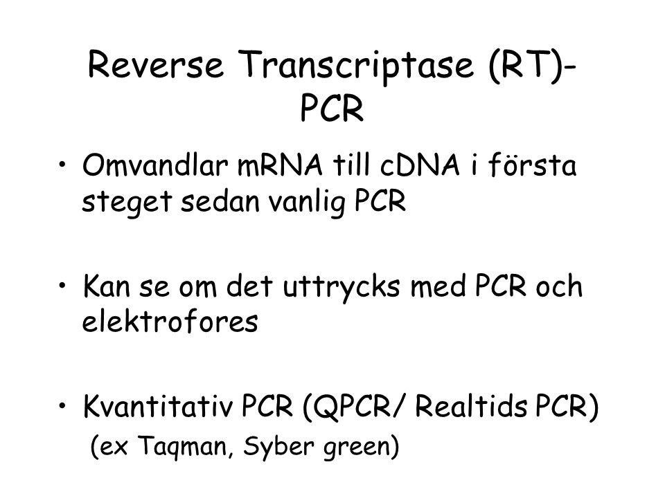 Reverse Transcriptase (RT)- PCR •Omvandlar mRNA till cDNA i första steget sedan vanlig PCR •Kan se om det uttrycks med PCR och elektrofores •Kvantitat