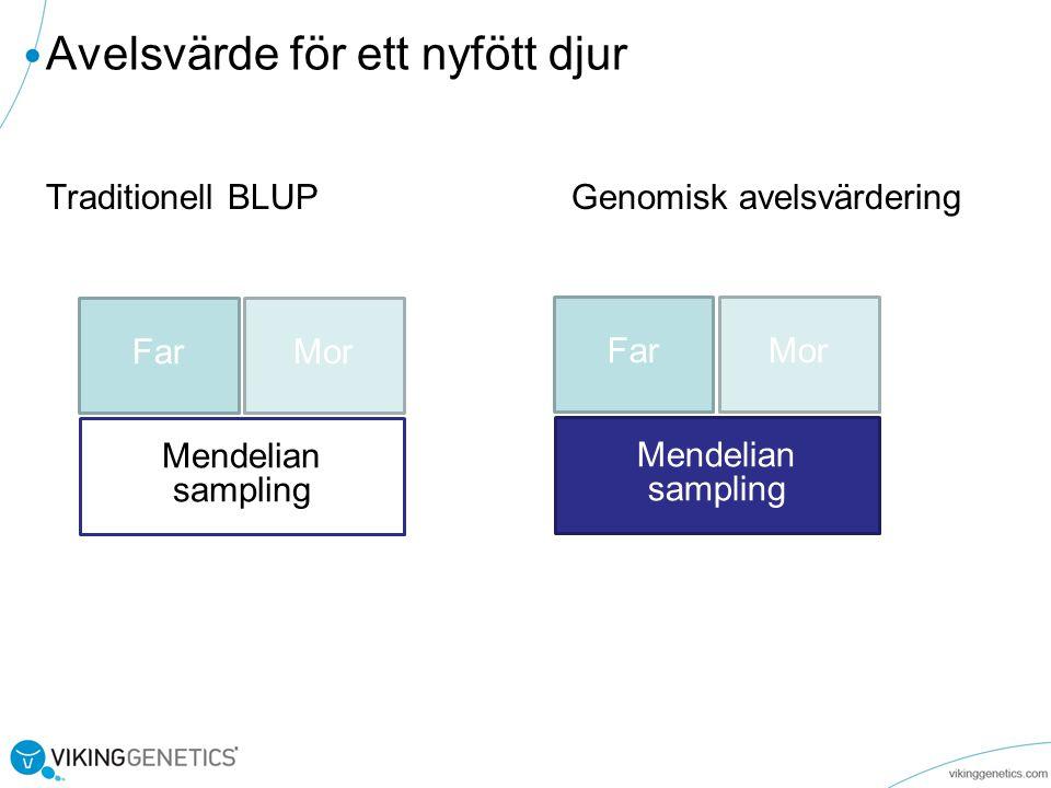 Traditionell BLUP Genomisk avelsvärdering Avelsvärde för ett nyfött djur FarMor Mendelian sampling FarMor Mendelian sampling