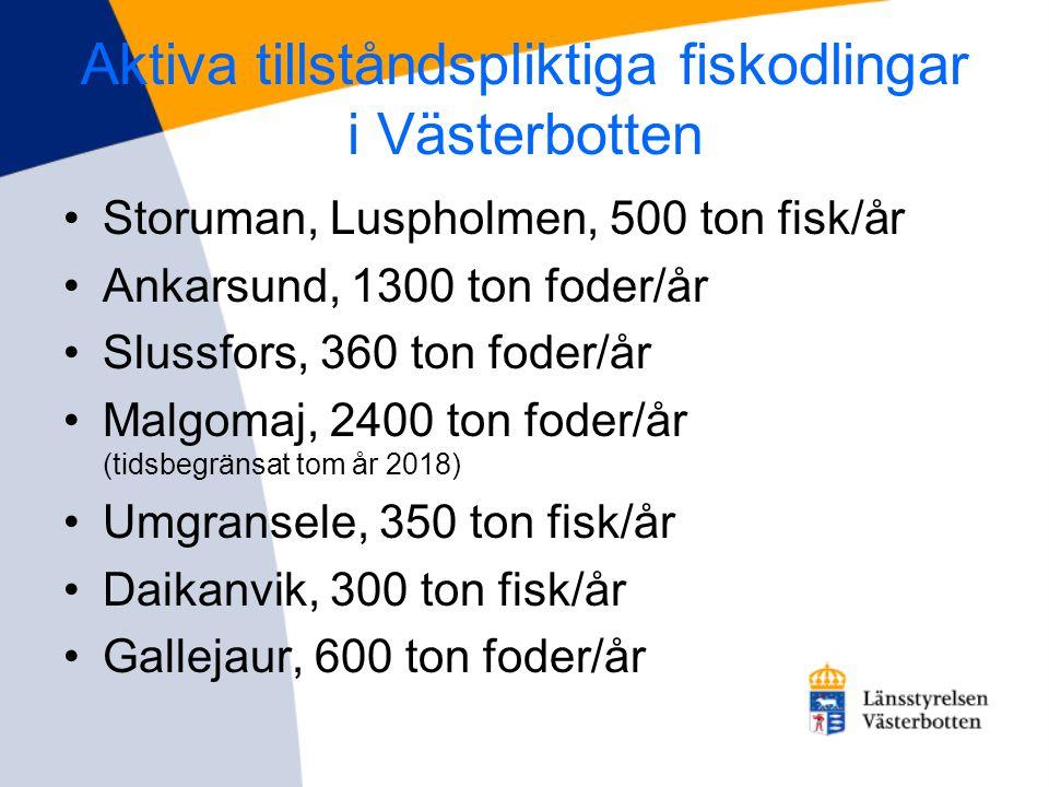 Aktiva tillståndspliktiga fiskodlingar i Västerbotten •Storuman, Luspholmen, 500 ton fisk/år •Ankarsund, 1300 ton foder/år •Slussfors, 360 ton foder/å