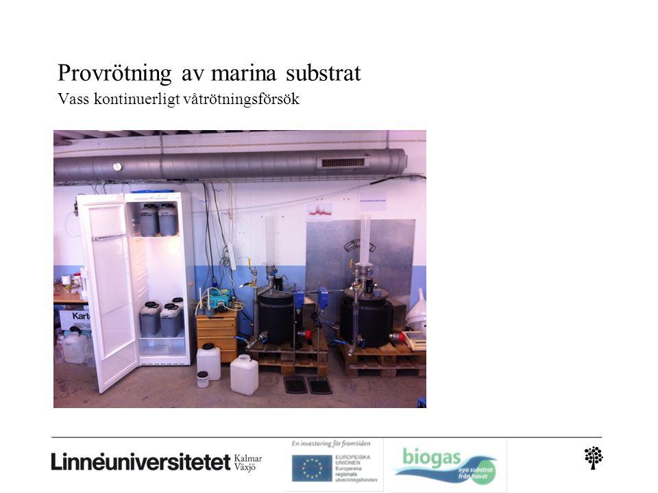 Provrötning av marina substrat Vass kontinuerligt våtrötningsförsök