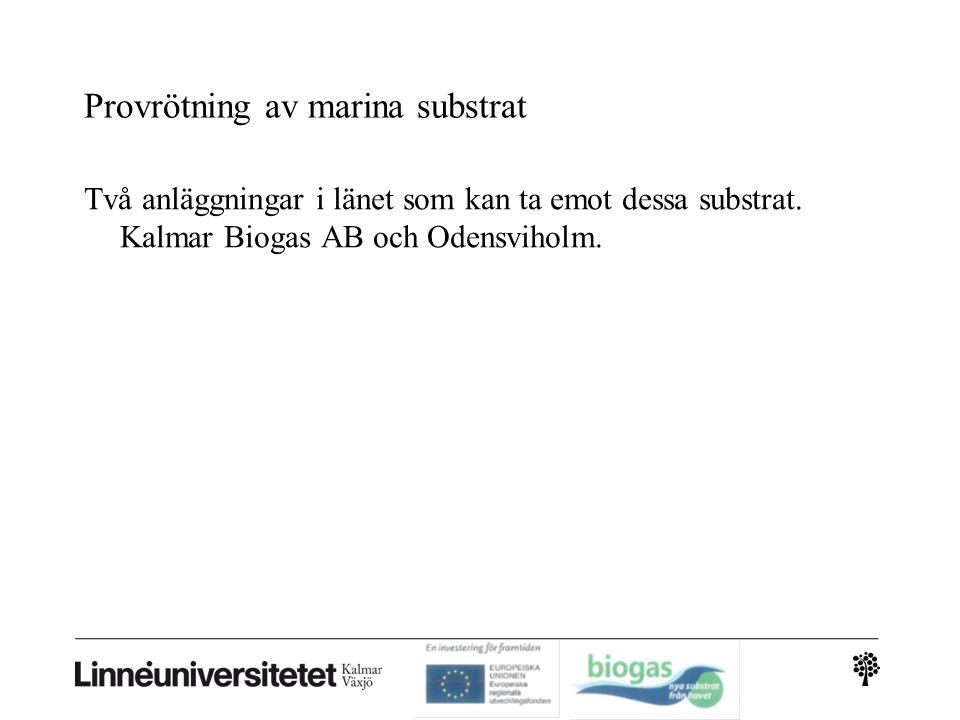 Provrötning av marina substrat Satsvisa försök med tillsats av organismer (ymp) från Kalmar Biogas anläggning Alger: Bara enkla satsvisa försök (långa avstånd från alger till biogasanläggningar, svårt att skörda större mängder på våra kuster, WAB-projektet i Trelleborg tittar på alger, Cd problematik i rötresten) ca 200 Ndm 3 metan/kg organiskt material N=normal (0 o C, 1bar)