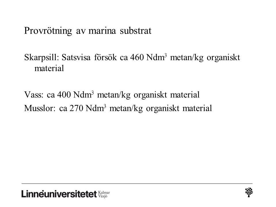 Provrötning av marina substrat Skarpsill: Satsvisa försök ca 460 Ndm 3 metan/kg organiskt material Vass: ca 400 Ndm 3 metan/kg organiskt material Musslor: ca 270 Ndm 3 metan/kg organiskt material