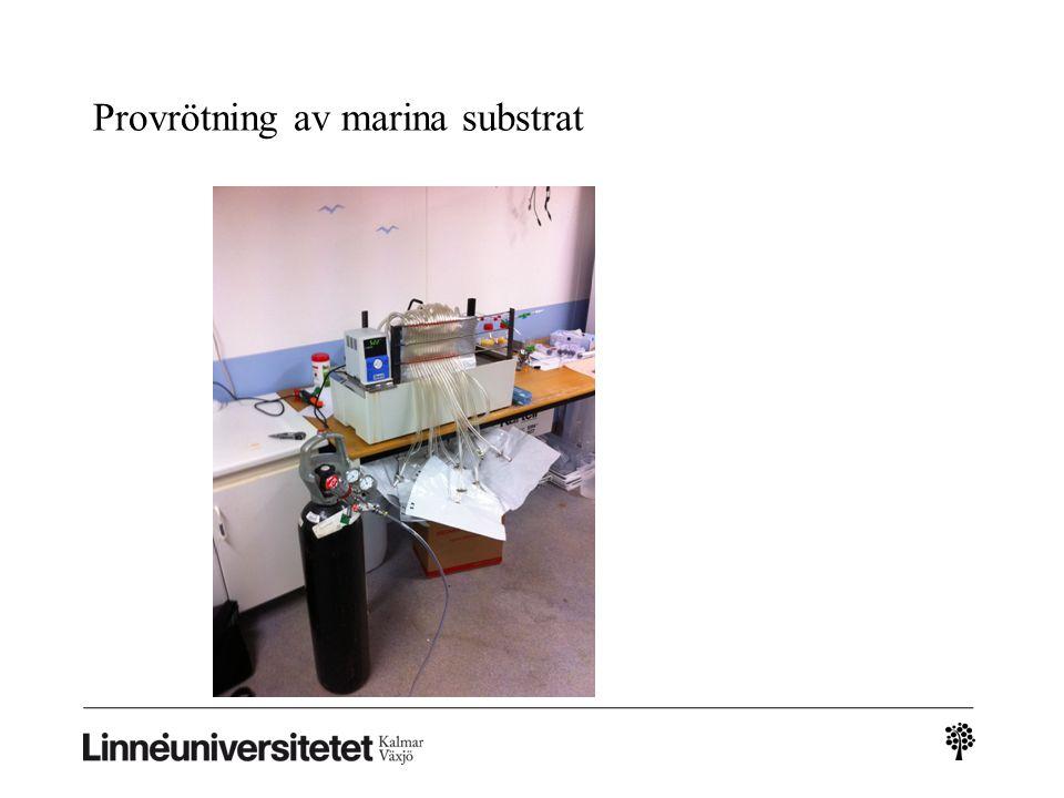 Provrötning av marina substrat Torrötning-musslor pilotskala