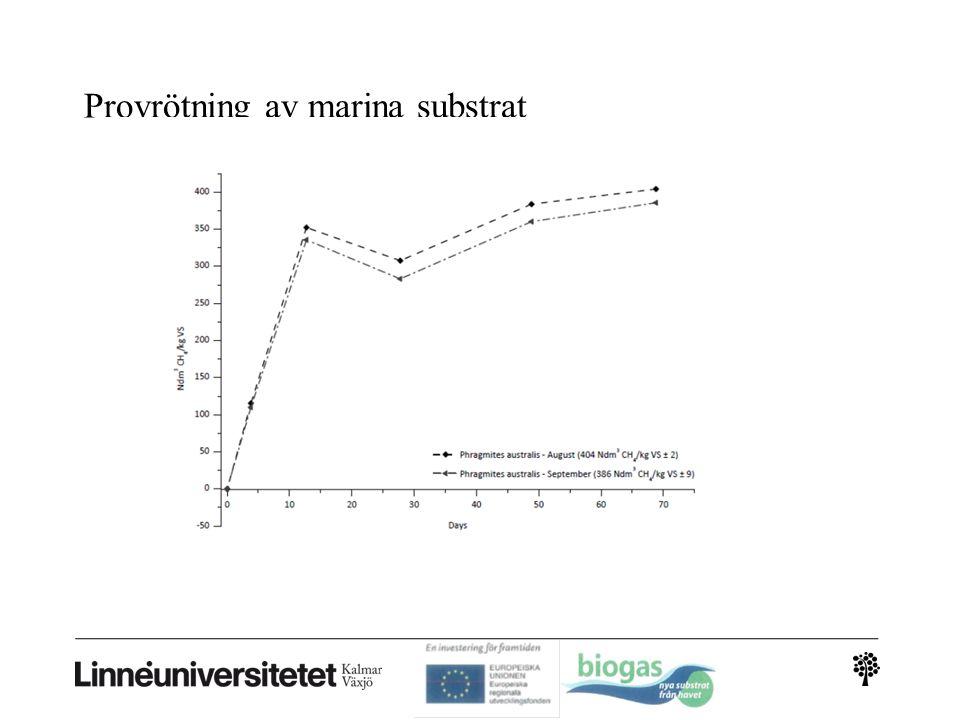 Provrötning av marina substrat blå staplar=egna resultat